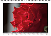 Rosen Schleswig-Holsteins (Wandkalender 2019 DIN A2 quer) - Produktdetailbild 6