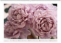 Rosen Schleswig-Holsteins (Wandkalender 2019 DIN A2 quer) - Produktdetailbild 10
