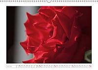 Rosen Schleswig-Holsteins (Wandkalender 2019 DIN A3 quer) - Produktdetailbild 6