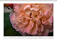 Rosen Schleswig-Holsteins (Wandkalender 2019 DIN A3 quer) - Produktdetailbild 4