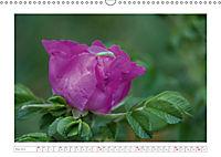 Rosen Schleswig-Holsteins (Wandkalender 2019 DIN A3 quer) - Produktdetailbild 5