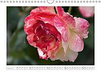 Rosen Schleswig-Holsteins (Wandkalender 2019 DIN A4 quer) - Produktdetailbild 1