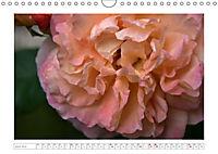 Rosen Schleswig-Holsteins (Wandkalender 2019 DIN A4 quer) - Produktdetailbild 4