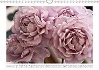 Rosen Schleswig-Holsteins (Wandkalender 2019 DIN A4 quer) - Produktdetailbild 10