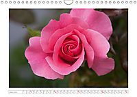 Rosen Schleswig-Holsteins (Wandkalender 2019 DIN A4 quer) - Produktdetailbild 3