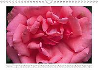 Rosen Schleswig-Holsteins (Wandkalender 2019 DIN A4 quer) - Produktdetailbild 8