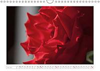 Rosen Schleswig-Holsteins (Wandkalender 2019 DIN A4 quer) - Produktdetailbild 6