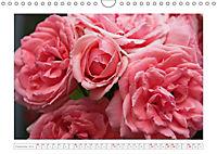 Rosen Schleswig-Holsteins (Wandkalender 2019 DIN A4 quer) - Produktdetailbild 12