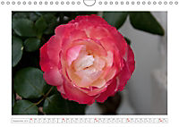 Rosen Schleswig-Holsteins (Wandkalender 2019 DIN A4 quer) - Produktdetailbild 9