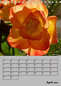 Rosen - Symbol der Liebe und Verehrung (Tischkalender 2019 DIN A5 hoch) - Produktdetailbild 4