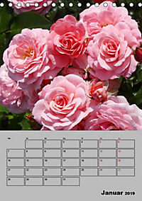 Rosen - Symbol der Liebe und Verehrung (Tischkalender 2019 DIN A5 hoch) - Produktdetailbild 1