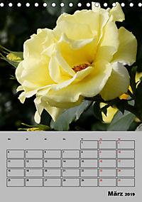 Rosen - Symbol der Liebe und Verehrung (Tischkalender 2019 DIN A5 hoch) - Produktdetailbild 3