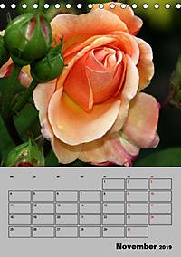 Rosen - Symbol der Liebe und Verehrung (Tischkalender 2019 DIN A5 hoch) - Produktdetailbild 11
