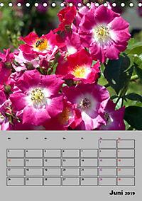 Rosen - Symbol der Liebe und Verehrung (Tischkalender 2019 DIN A5 hoch) - Produktdetailbild 6