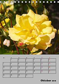 Rosen - Symbol der Liebe und Verehrung (Tischkalender 2019 DIN A5 hoch) - Produktdetailbild 10