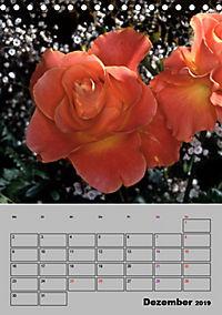 Rosen - Symbol der Liebe und Verehrung (Tischkalender 2019 DIN A5 hoch) - Produktdetailbild 12