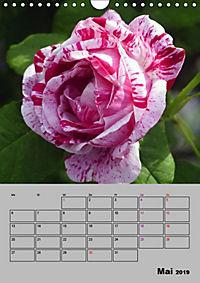 Rosen - Symbol der Liebe und Verehrung (Wandkalender 2019 DIN A4 hoch) - Produktdetailbild 5