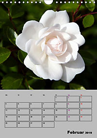 Rosen - Symbol der Liebe und Verehrung (Wandkalender 2019 DIN A4 hoch) - Produktdetailbild 2