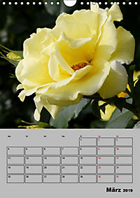 Rosen - Symbol der Liebe und Verehrung (Wandkalender 2019 DIN A4 hoch) - Produktdetailbild 3