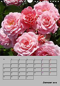 Rosen - Symbol der Liebe und Verehrung (Wandkalender 2019 DIN A4 hoch) - Produktdetailbild 1