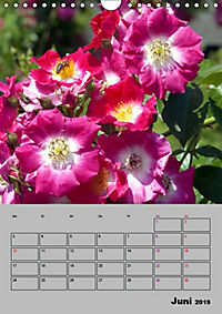 Rosen - Symbol der Liebe und Verehrung (Wandkalender 2019 DIN A4 hoch) - Produktdetailbild 6