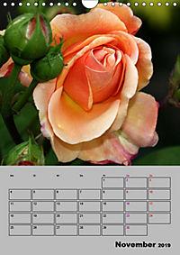 Rosen - Symbol der Liebe und Verehrung (Wandkalender 2019 DIN A4 hoch) - Produktdetailbild 11