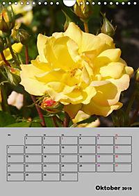 Rosen - Symbol der Liebe und Verehrung (Wandkalender 2019 DIN A4 hoch) - Produktdetailbild 10