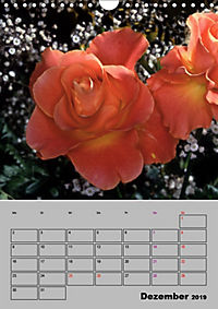 Rosen - Symbol der Liebe und Verehrung (Wandkalender 2019 DIN A4 hoch) - Produktdetailbild 12