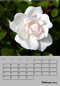 Rosen - Symbol der Liebe und Verehrung (Wandkalender 2019 DIN A2 hoch) - Produktdetailbild 2