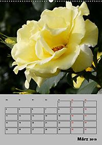 Rosen - Symbol der Liebe und Verehrung (Wandkalender 2019 DIN A2 hoch) - Produktdetailbild 3