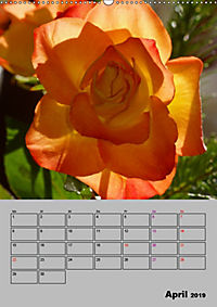 Rosen - Symbol der Liebe und Verehrung (Wandkalender 2019 DIN A2 hoch) - Produktdetailbild 4