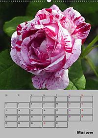 Rosen - Symbol der Liebe und Verehrung (Wandkalender 2019 DIN A2 hoch) - Produktdetailbild 5