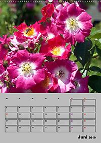Rosen - Symbol der Liebe und Verehrung (Wandkalender 2019 DIN A2 hoch) - Produktdetailbild 6