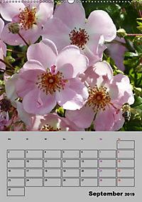 Rosen - Symbol der Liebe und Verehrung (Wandkalender 2019 DIN A2 hoch) - Produktdetailbild 9