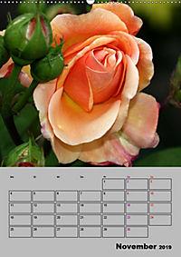 Rosen - Symbol der Liebe und Verehrung (Wandkalender 2019 DIN A2 hoch) - Produktdetailbild 11