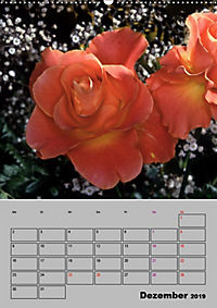 Rosen - Symbol der Liebe und Verehrung (Wandkalender 2019 DIN A2 hoch) - Produktdetailbild 12