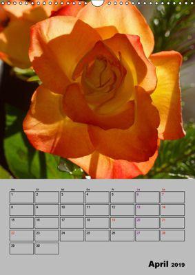 Geschenk-Postkartenbuch Sag es mit Rosen mit Text 30 Postkarten Rosen NEU