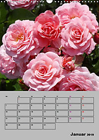 Rosen - Symbol der Liebe und Verehrung (Wandkalender 2019 DIN A3 hoch) - Produktdetailbild 1