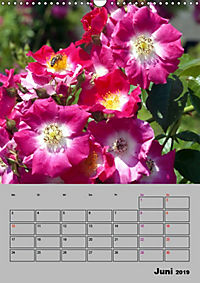 Rosen - Symbol der Liebe und Verehrung (Wandkalender 2019 DIN A3 hoch) - Produktdetailbild 6