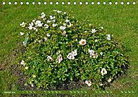 Rosengarten auf dem Beutig (Tischkalender 2019 DIN A5 quer) - Produktdetailbild 1