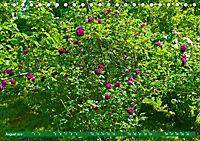 Rosengarten auf dem Beutig (Tischkalender 2019 DIN A5 quer) - Produktdetailbild 8