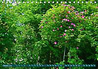 Rosengarten auf dem Beutig (Tischkalender 2019 DIN A5 quer) - Produktdetailbild 10