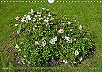 Rosengarten auf dem Beutig (Wandkalender 2019 DIN A4 quer) - Produktdetailbild 1