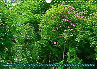 Rosengarten auf dem Beutig (Wandkalender 2019 DIN A4 quer) - Produktdetailbild 10