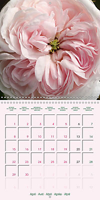 Roses Very Close (Wall Calendar 2019 300 × 300 mm Square) - Produktdetailbild 4