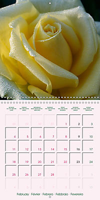 Roses Very Close (Wall Calendar 2019 300 × 300 mm Square) - Produktdetailbild 2