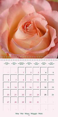 Roses Very Close (Wall Calendar 2019 300 × 300 mm Square) - Produktdetailbild 5