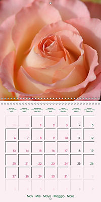 Roses Very Close (Wall Calendar 2019 300 × 300 mm Square) - Produktdetailbild 5