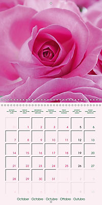 Roses Very Close (Wall Calendar 2019 300 × 300 mm Square) - Produktdetailbild 10