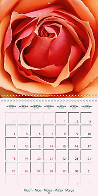 Roses Very Close (Wall Calendar 2019 300 × 300 mm Square) - Produktdetailbild 3